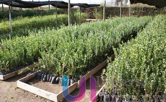Fomenta Sedrua el establecimiento de huertos frutales