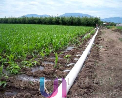 Con riego tecnificado, mil 174 hectáreas del campo: Sedrua