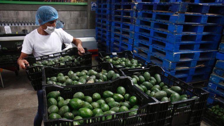 Agro, ganadería y pesca de Michoacán, las segundas más  productiva