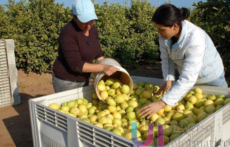 Al agro de Michoacán, nuevos esquemas de financiamiento: Sedrua