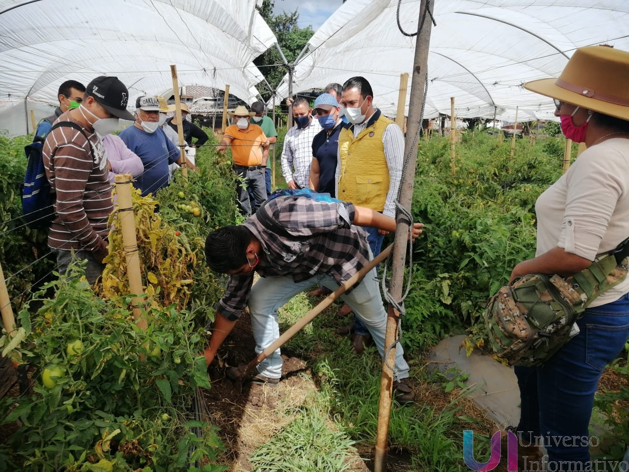 Agricultura Sustentable, convence a productores de jitomate en Huandacareo