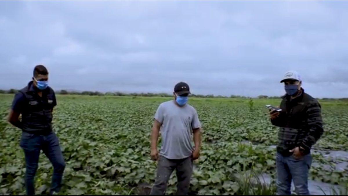 Sorprende en Villamar producción de pepino con Agricultura Sustentable